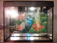 37.16 Gallon Glass Fish Tank/Aquarium with Hood for Sale SANJOSE