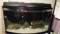 Salt water tank w/fish null