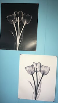 Tulip pictures Cambridge, N3C 1L6