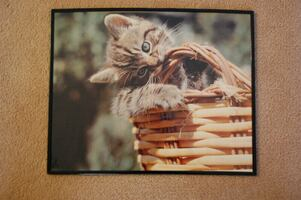 Kitten Poster in black rimmed frame