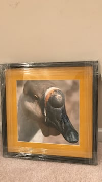 Black wooden frame black beak bird photo Chantilly, 20152