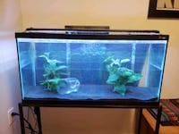 40 Gallon Fishtank with Assortment of Accessories Toronto, M4W 1A9