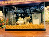 20 Gal fish tank with pebbles and accessories Ashburn