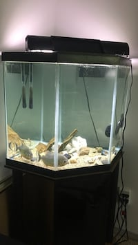 Selling two piranhas only  Kelowna, V1Y 6K4
