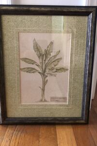 Framed plant painting