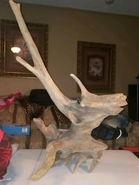 Driftwood from Boone