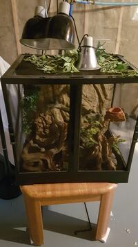 Terrarium plus accessories