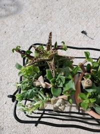 Mini wire succulent basket arrangement  Chula Vista, 91910