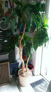 Artificial tree for your home decoration Lantana, 33462