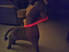 brown horse ride on toy