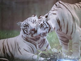 Vintage, White Tigers poster