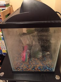 10 Gallon fish tank with water heater and water filter Gainesville, 20155