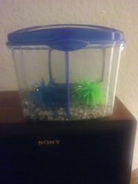 beta fish tank Laguna Hills, 92653