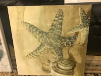 Star fish picture Centreville