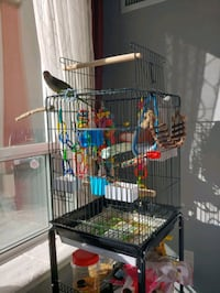 Parrot Cage w/ Cage Stand **PARROT NOT FOR SALE** Vaughan, L4J 9K4
