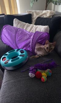 Kitten or cat Toy bundle - cat not included