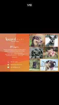 Pet Photography - Summer Bookings 2018