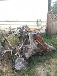 Free fire wood. Large tree trunk/stumps Burnaby, V3N 1M3