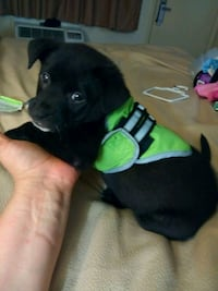 Extra small puppy cooling vest Morrow, 30260