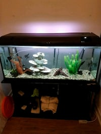 70 gallon fish tank with fish and accesories! Toronto, M2K 0B4
