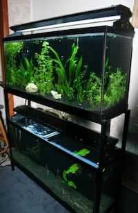 55 galon fish tank with stand and all chemicals and decorations  Ottawa