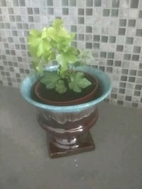 green and brown ceramic vase Hampstead, H3X 1S2