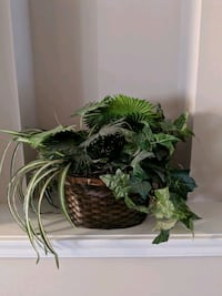 plants in brown rattan planter
