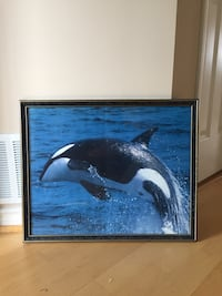 Black and gold framed orca  Port Coquitlam