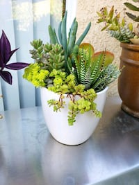 Succulents #123 Lake Forest, 92610