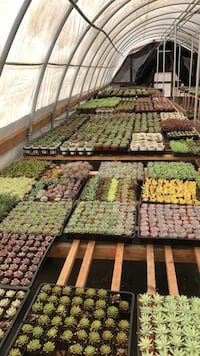 succulents. Super sale only today!!! Fallbrook, 92028