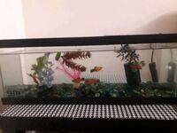 Fish tank for sale Glendale, 91203