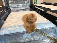 All mattresses need to go ASAP - up to 80% off until gone - LIMITED QUANTITY!!