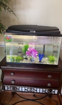 Tank with fishes and everything  Laurel