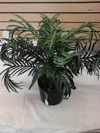 Small  artificial  plant have 2at 15 each Myrtle Beach, 29575