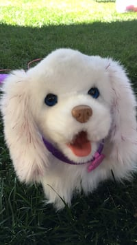 Perfect condition White and pink Go go walking puppy Sherwood Park, T8H 2V8