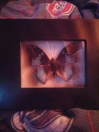 black and white butterfly framed ornament St. Catharines, L2P 0B2