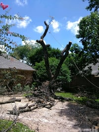 Daniel tree service Dallas, 75214