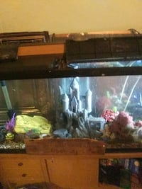 fish tank 55 gallon complete with   fish also come Des Moines, 50321