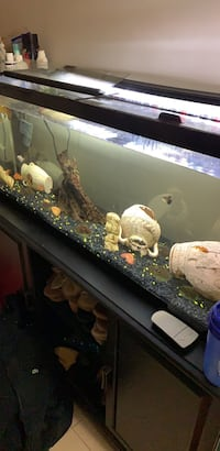 50g tank fish with the stand  Edmonton, T5Z 0M4