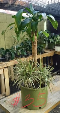 Medium plant 2 in 1 $35 firm Los Angeles, 90044