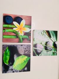 green and white flower painting Surrey, V4P 2J4