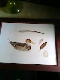 white and brown bird painting Baltimore, 21205