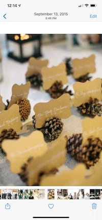Wedding Pinecones Watertown, 02472