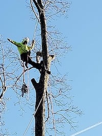 Tree cutting Washington, 20011