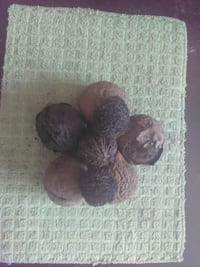 North Carolina Black Walnuts