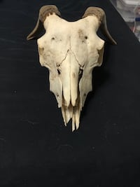 Goat skull ready to hang! The Village, 73120