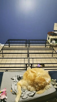 Metal Bed Frame Frederick, 21701
