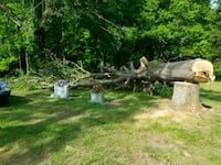 Tree trimming and removals call  [TL_HIDDEN]  Clarksville