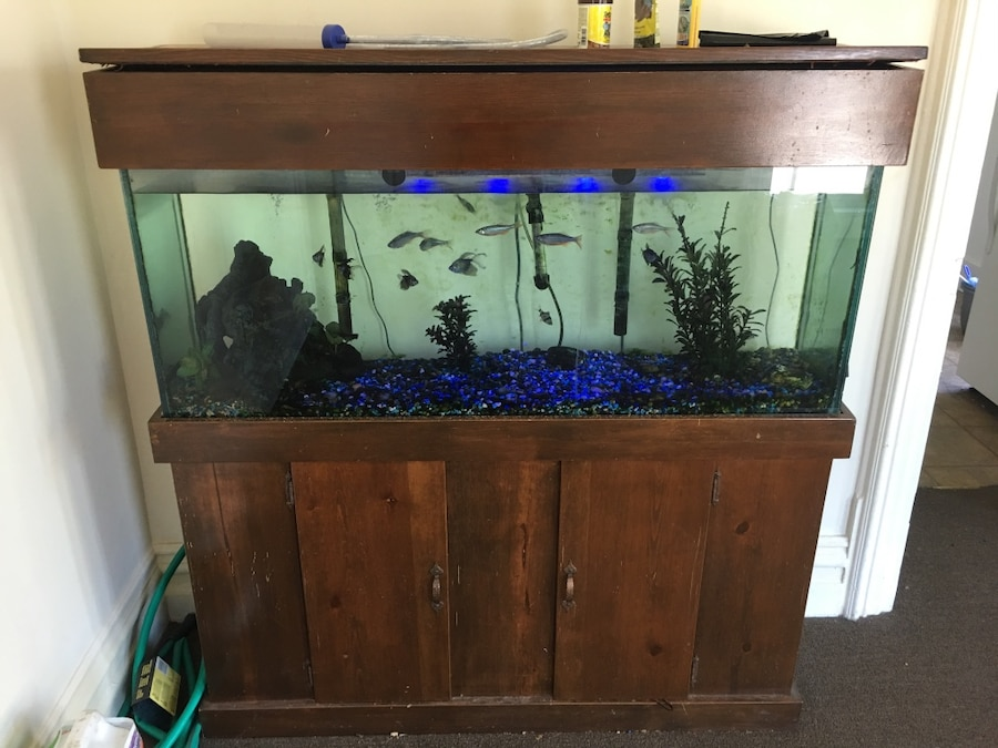 Used rectangular clear glass fish tank in crawfordsville for Rectangle fish tank
