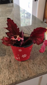 red and black artificial flower decor Drummond/North Elmsley, K7H